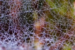 Spiderweb with water drops Royalty Free Stock Photography