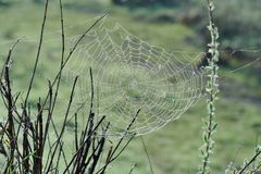 Spiderweb with Water Drops Royalty Free Stock Images