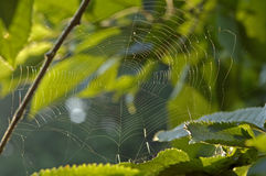 Spiderweb with waterdrops. In a green garden stock photos