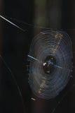 Spiderweb Royalty Free Stock Photos