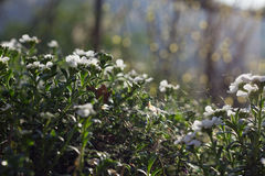 Spiderweb in White Flowers. In the Sunset Stock Photo