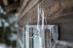 Spiderweb on wooden window Royalty Free Stock Photo