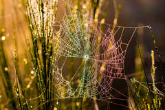 Spiderweb in the Woods. A big Spiderweb in the wood at morning hours royalty free stock photo