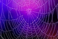 Spiderweb z rosa kroplami zdjęcia stock