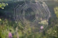 Spiderweb zakrywał z rosa kroplami przy wschodem słońca zdjęcie stock