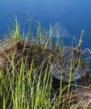 Spiderwebs στην προκυμαία Στοκ εικόνες με δικαίωμα ελεύθερης χρήσης