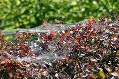 Spiderwebs блестящее в солнечном свете Стоковая Фотография RF