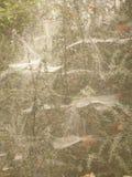 Spiderwebs в тумане Стоковые Фото