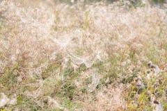 Spiderwebs в луге Стоковые Фото
