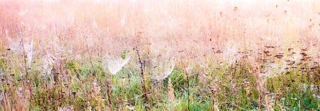 Spiderwebs в луге Стоковые Фотографии RF