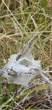 Spiderwebs паука стоковые фотографии rf