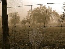 spiderwebs Стоковые Изображения
