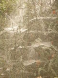 Spiderwebs in Fog Stock Photos