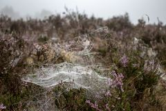 Spiderwebs in heath landscape stock images