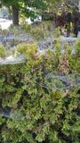 Spiderwebs kusliga grannskapberättelser Royaltyfria Bilder