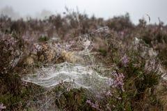 Spiderwebs w wrzosowisko krajobrazie obrazy stock