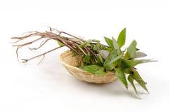 Spiderwort реки или spiderwort мал-лист. (Пенька Таиланд травы fluminensis традесканциы). Стоковая Фотография