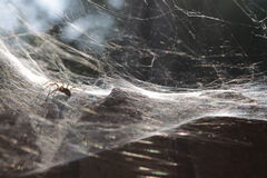 Spidery trap Royalty Free Stock Photo