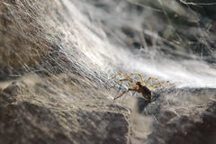 Spidery trap Royalty Free Stock Photos