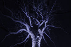 Spidery winter tree spotlighted from beneath giving it a spooky Royalty Free Stock Photography