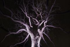 Spidery winter tree spotlighted from beneath giving it a spooky Stock Images