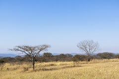 Spieczeni Susi zimy trawy drzewa i Odległa linia horyzontu Zdjęcie Stock