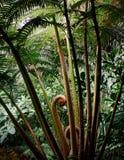 Spiegando la punta dell'albero fren in foresta pluviale, Okinawa, Giappone immagini stock libere da diritti