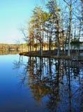 Spiegel-Reflexionsbäume auf Wasser Stockbild