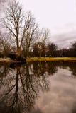 Spiegelbeeld van lege bomen Royalty-vrije Stock Afbeeldingen