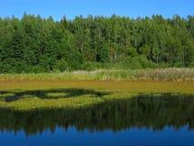 Spiegelreflexion in der Natur Lizenzfreies Stockfoto
