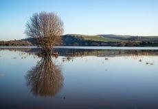 Spiegelreflexionen der Landschaft in den Überschwemmungsgebieten im Winter Lizenzfreie Stockfotos