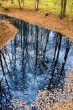 Spiegelung von Bäumen auf Wasseroberfläche Lizenzfreies Stockbild