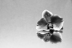 Spiegelung von Natur-Schönheit stockfotografie