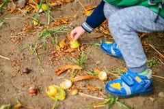 Spiel des kleinen Jungen mit Kastanien am Herbsttag Stockfotografie