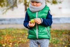 Spiel des kleinen Jungen mit Kastanien am Herbsttag Lizenzfreie Stockfotos