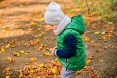 Spiel des kleinen Jungen mit Kastanien am Herbsttag Lizenzfreies Stockbild