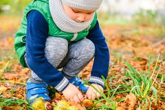 Spiel des kleinen Jungen mit Kastanien am Herbsttag Lizenzfreie Stockfotografie