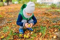 Spiel des kleinen Jungen mit Kastanien am Herbsttag Stockbild