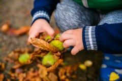 Spiel des kleinen Jungen mit Kastanien am Herbsttag Stockfoto