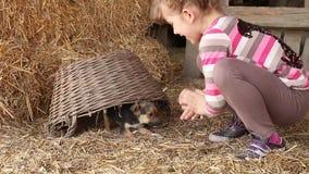 Spiel des kleinen Mädchens mit Welpen stock video footage