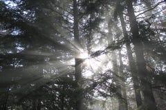Spiel des Lichtes im Wald Lizenzfreie Stockfotografie