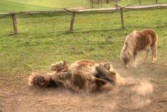 Spiel des Ponys Stockbild