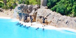 Spiele der Delphine mit Kugeln Stockbild
