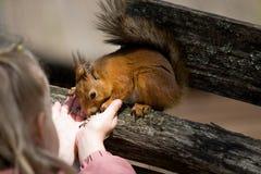 Spiele des kleinen Mädchens mit dem Eichhörnchen Stockfotografie