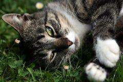 Spielen der Katze Lizenzfreies Stockbild
