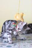 Spielen der Katze stockbild
