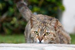 Spielen der Katze auf der Straße Lizenzfreie Stockbilder