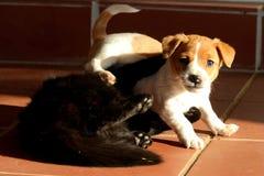 Spielen der Katze und des Hundes Stockfotografie