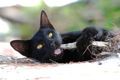 Spielen der schwarzen Katze stockfoto