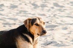 Spielen des Hundes auf dem Strand Lizenzfreie Stockbilder